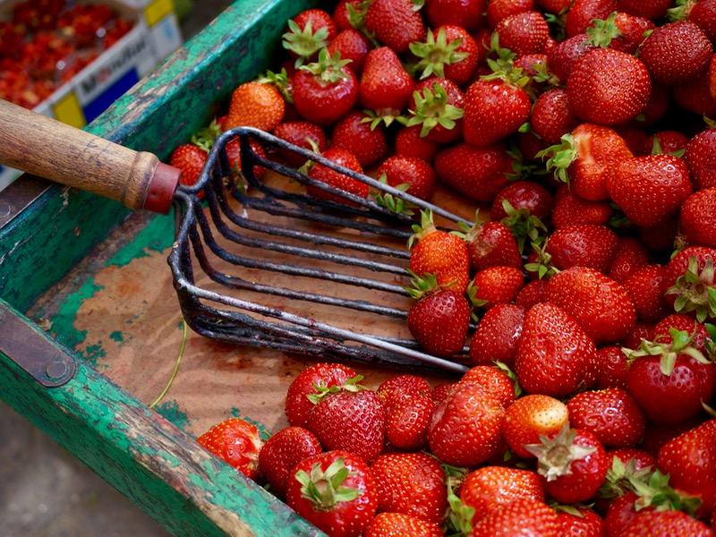 Saison: Erdbeeren